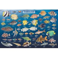 (36x24) Laminated Tropical Fish Educational Chart Poster