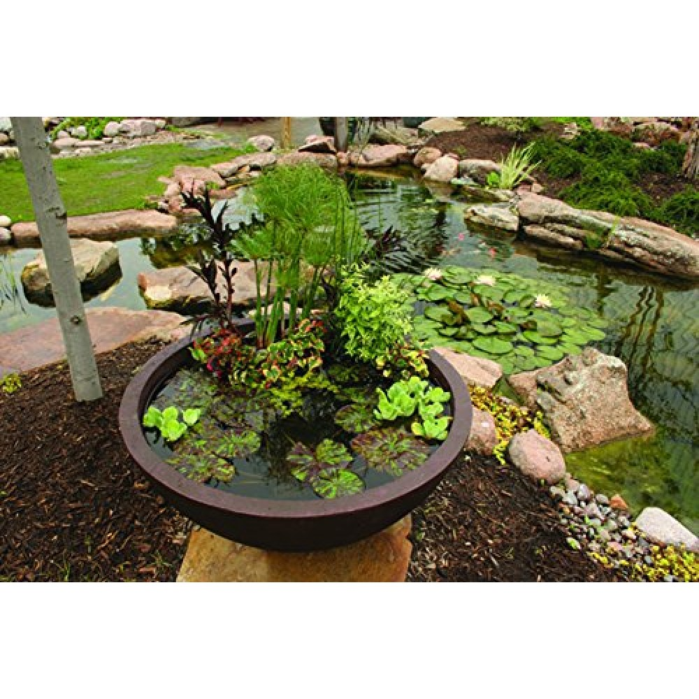 Aquascape 98857 Aquatic Patio Pond Water Garden, 32-Inch ...