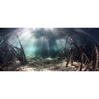 "Mangrove with Sunlight / Aquarium Background 21"" x 48"" / 55 Gallon / Fish Tank Background"