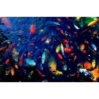 Colorful Fish by Wall Decor Prints 18x12 Art Print Poster Wall Decor Koi Fish In Pond Outdoors Rainbow Fish Photography Spring