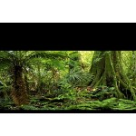 "Reptile Habitat Background, Rain Forest, 24"" X 36"", with Adhesive Squares"