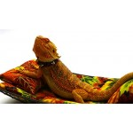 Chaise Lounge for Bearded Dragons, Autumn Leaves fabric