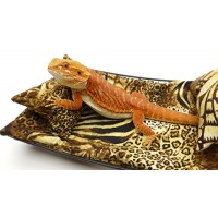 Chaise Lounge for Bearded Dragons, Safari fabric