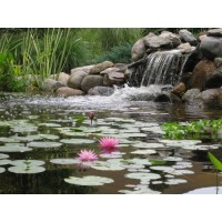 EasyPro WF10E Eco-Series Prelude Waterfall Filter for Ponds up to 1000 Gallons