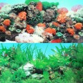 "9090 20"" x 48"" Double Sided Fish Tank Aquarium Background Tropical/Reef"