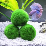 """Luffy 3 Giant Marimo Moss Balls (1.5"""") : Biological, Natural, Chemical Free Filter System : Removes Nitrates : A Beautiful way to keep Fish and Aqu..."""