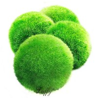 4 LUFFY Marimo Moss Balls - Aesthetically Beautiful & Create Healthy Environment - Eco-Friendly, Low Maintenance & Curbs Algae Growth - Shrimps & S...