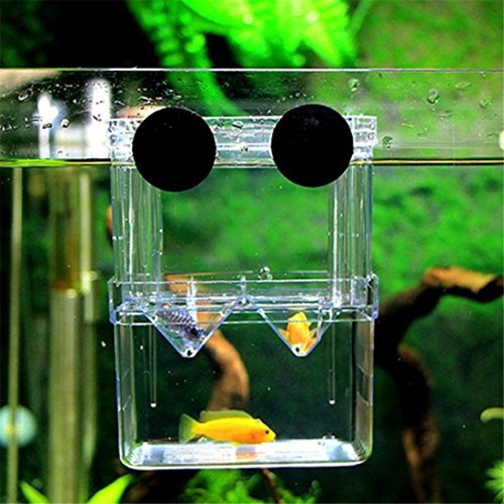 New 55g Setup additionally Live Plants Lighting Requirements 4092855 moreover Page 3 together with Watch furthermore Septic Systems. on aquarium plumbing design